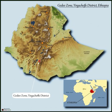 Ethiopia - Gedeo Zone Yirgacheffe District