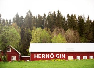 Likt en gindrickares våra dröm ligger där Hernö Gindestilleri som en hägring på andra sidan ängen. En bild över destilleriet, således.